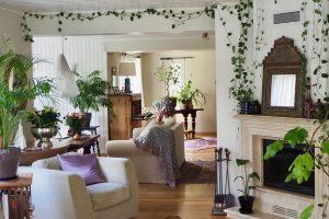 Huonekasvien hoitopäivä
