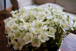 Kummallisen talven kukat
